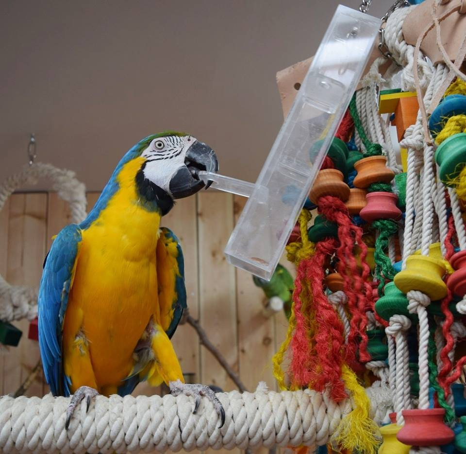 Arrangement of the interior aviary of macaw parrot