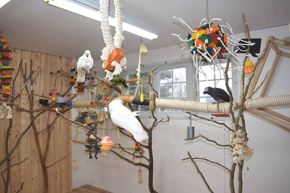Arrangement of the interior aviary of my parrot