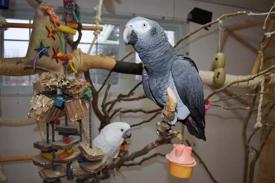 Arrangement of the interior aviary of my parrots