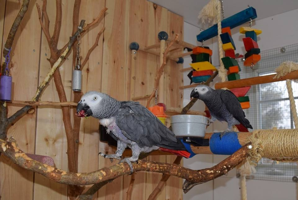 Arrangement of the interior aviary of parrot