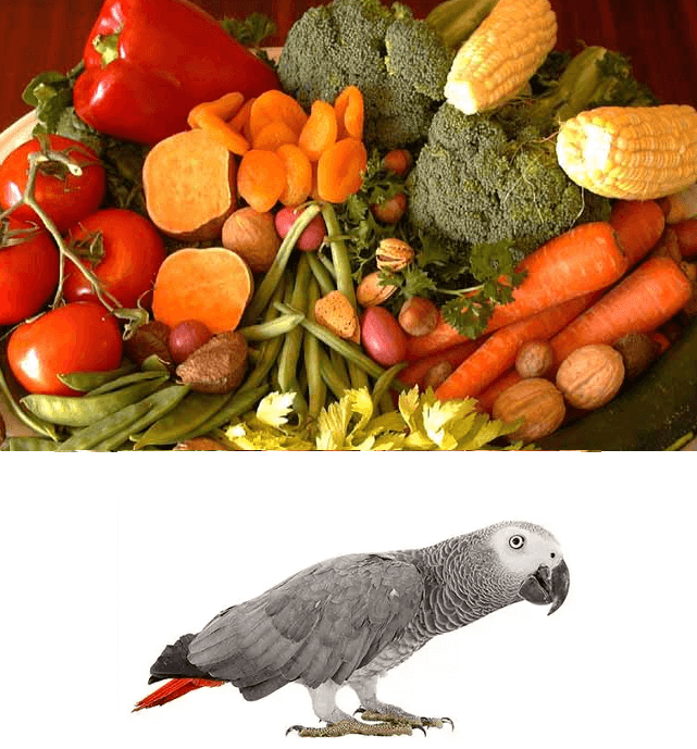 Copper for african grey parrot
