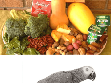 Minerals for african grey parrots