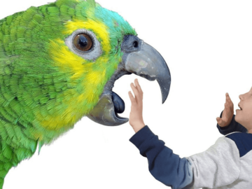 Parrot Thoughts on Dominance