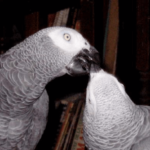 Affection and the parrot