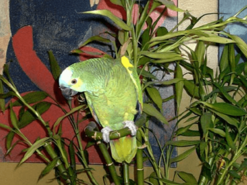 Bamboo and parrots