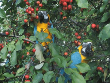 Ethology and the parrot