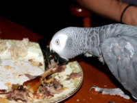 Feeding your parrot