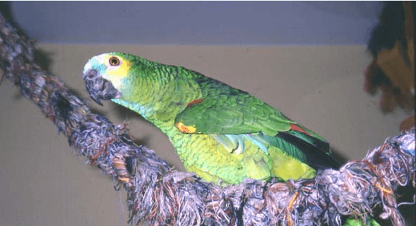 Is your parrot safe