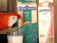 Milk and parrots