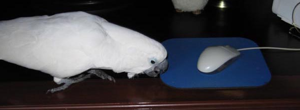 My parrot always wants to play