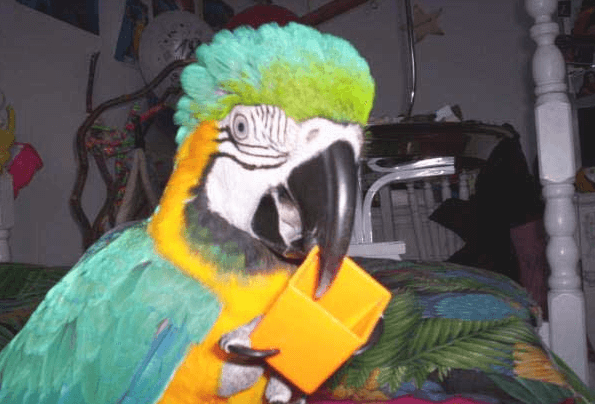 Parasites and viruses in parrots