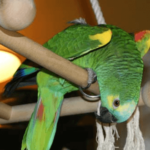 Peculiarities of the anatomy and physiology of parrots