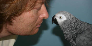 Punishment and the parrot