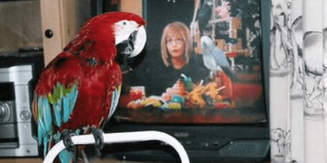 TV, music and parrots