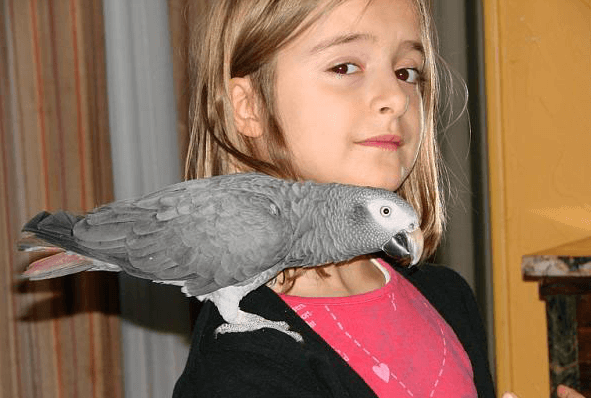 The autonomous parrot