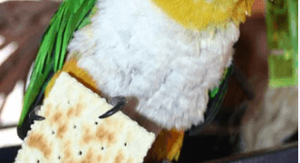 The parrot and food myths