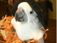 The parrot, safe Halloween