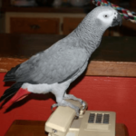 The parrot that learns to learn