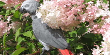What threatens our birds of the parrots outside