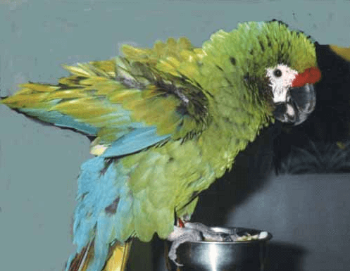 Your parrot is talking to you ... look at it