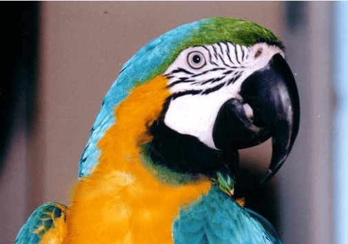 the parrot and Cocoa
