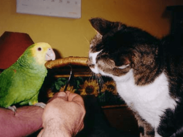 the parrot and bites of Cat