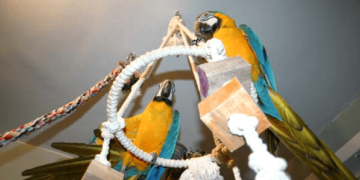 toys of parrot