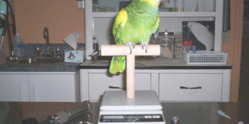 Health of parrot