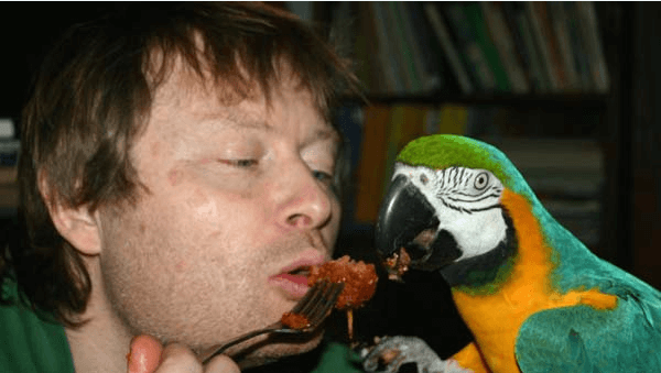 The health of the parrot depends on the right diet