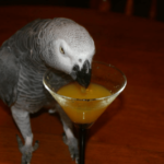 the good parrot